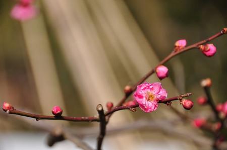 20110226_kenrokuen2